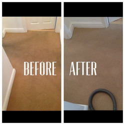 Carpet (2).jpeg