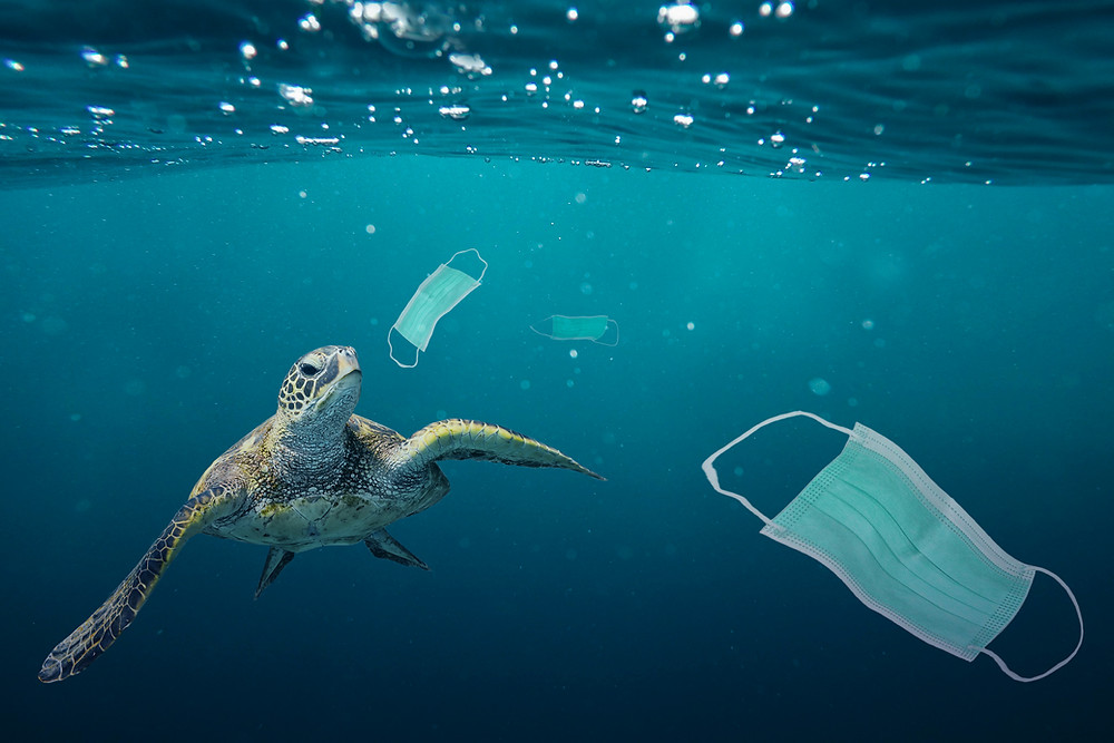 sea turtles, litter, disposable ppe, trash in the ocean