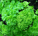 Parsley - curly.PNG
