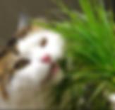 cat grass.PNG