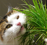 cat grass.PNG