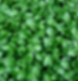 watercress.PNG