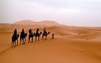 came-trel-k-in-merzouga.jpg