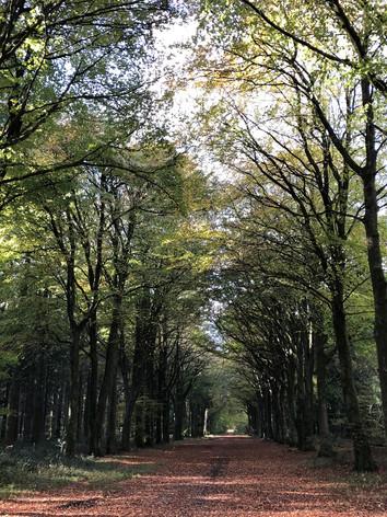Groveley Woods.jpg