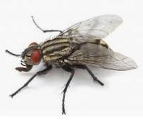 flying_bug.JPG