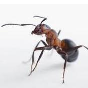 殺蟲公司 - 螞蟻.jpg
