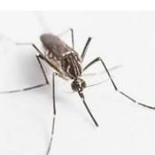 滅蟲公司 - 蚊子.jpg