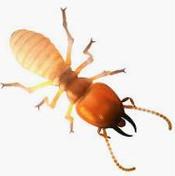 滅蟲公司 - 白蟻.jpg