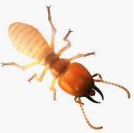 termite.JPG