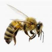 殺蟲公司 - 蜂.jpg