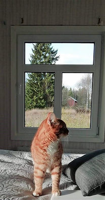 Exellentfönster.jpg