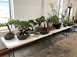 Auction 2019 Trees03.JPG