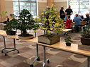 Display Tree Exhibit at Howard County Library 10-20-2018