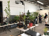 Auction 2019 Trees02.JPG