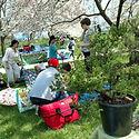 Maryland Bonsai Association Attedees at the Baltimore-Kawasaki Sister City Annual Hanami Outdoor Picnic at Middle Branch Park, Brooklyn, Maryland