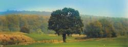Golfclub am Harrl 04