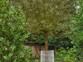 The Weeping Willow Garden