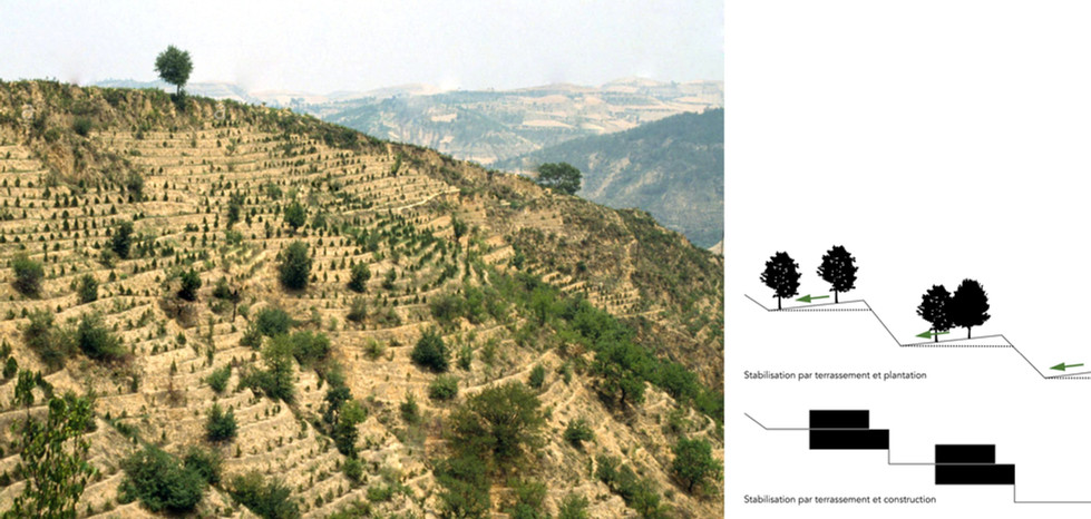 Terrassements et plantations d'arbres pour prévenir l'érosion du sol. Exemple à Shaanxi Yanan, Chine - stabilisation par plantation et implantation