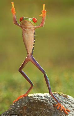 frog star jumping