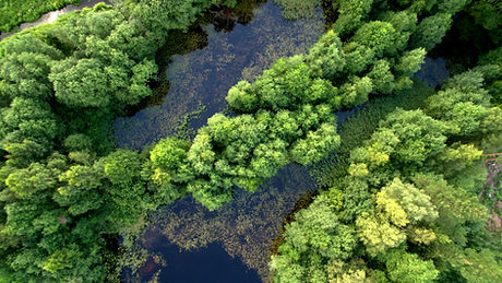 Green trees grow in the swamp 4K.jpg