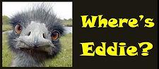 Eddie-Logo1.jpg