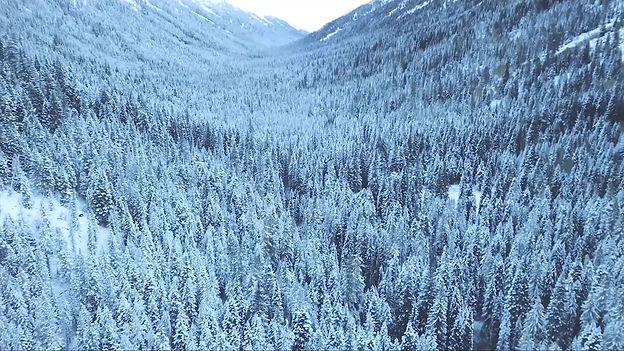 Short video about Snow Leopard Creative