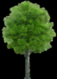 Tree - 1833x2500.png