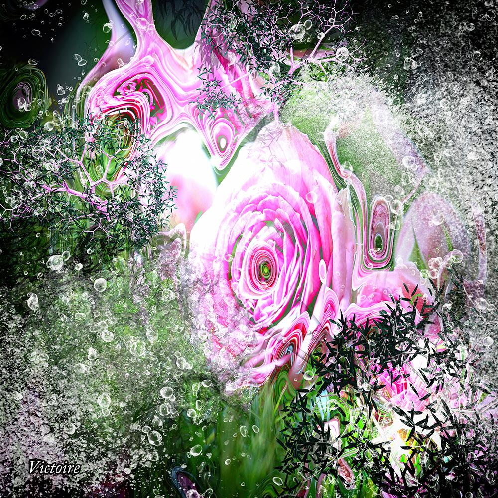 Buisson de rose