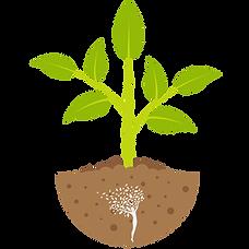big plant.png