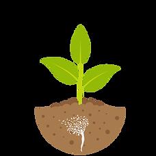 med plant.png