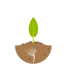 lil plant.png