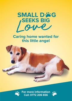 Dog Advert.jpg
