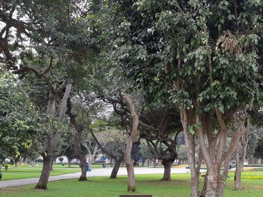 areas verdes.jpg