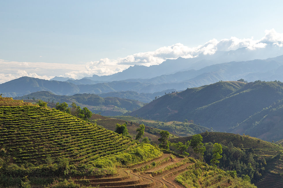 Vietnam rice fields Bobby Burch Photography