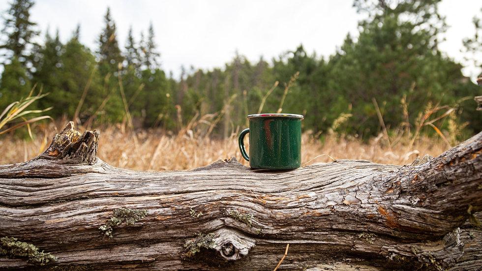 Coffee mug sitting on a log in a forest.