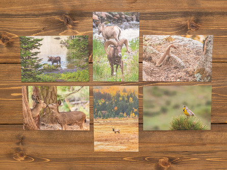 Wildlife Postcards — Pack of Six $18