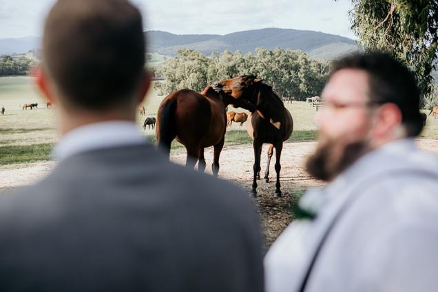 Wandin Park Estate Brendan Creaser Photography Wedding 17