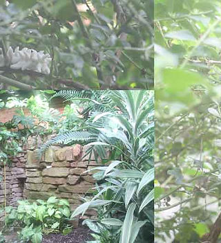 Tropical-ravine-collage.jpg