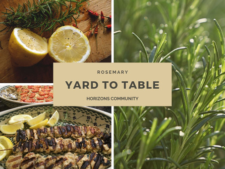 Yard to Table: Rosemary