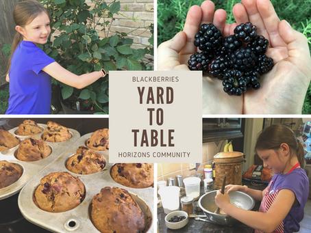 Yard To Table: Natchez Blackberries