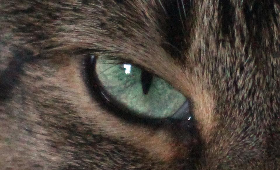 Custom designed 117 mm F/4.5 cat image close up