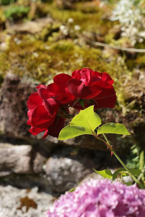 Flamboyant red