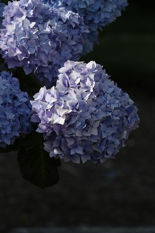 Purple constellation