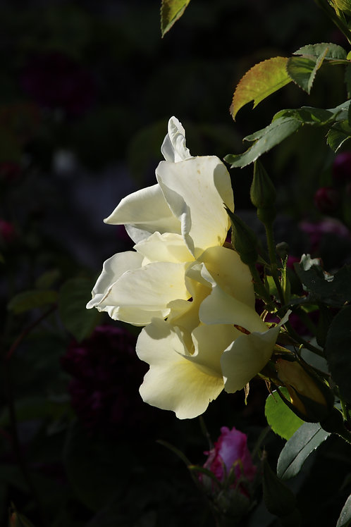 White treasure