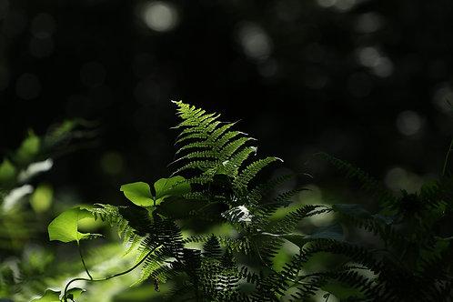 Green riviera