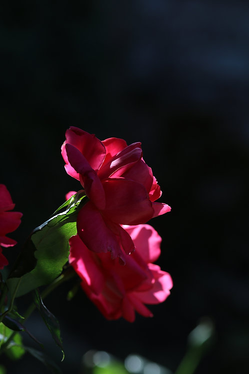 Pink union