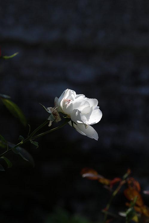 White arm