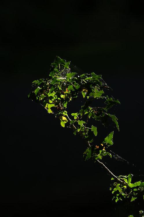 Green subject