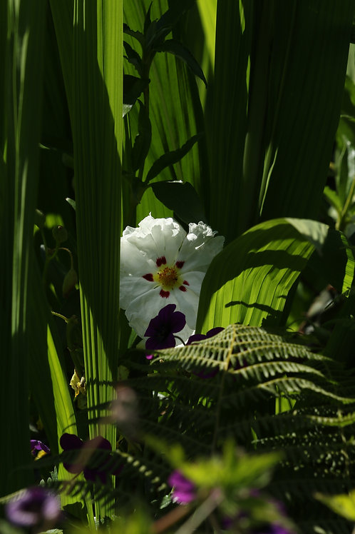 Jungle and flower