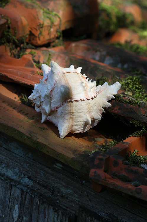 Shell on the roof